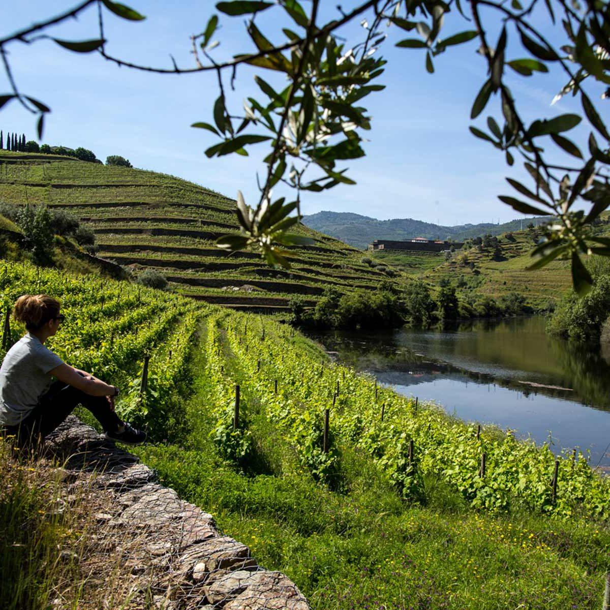 Douro Wine Tour